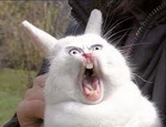 Приколы кролики