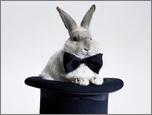 Конкурс статей по кролиководству