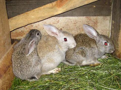 Крольчата подросли, теперь им нужна отдельная клетка