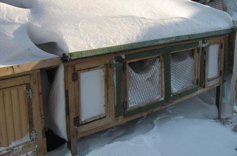 Клетку задуло снегом